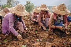 Vita e lavoro rurali della gente birmana Immagine Stock