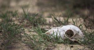 Vita e morte Fotografia Stock Libera da Diritti