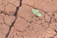 Vita e siccità Immagini Stock