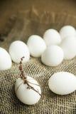 Vita easter ägg som dekoreras med torkade blommor och det rosa repet Arkivbilder
