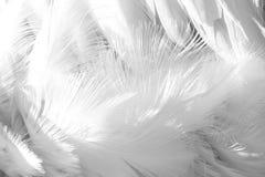 Vita fågelfjädrar Försiktig mjuk naturbakgrund arkivbild