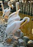 vita fåglar Arkivfoton