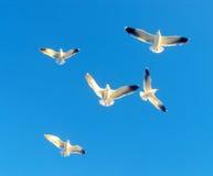 vita fåglar arkivfoto