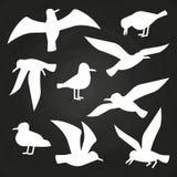 Vita fåglar på den svart tavlan - flygseagullskonturer stock illustrationer