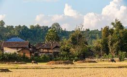 Vita familiare di felicità nel villaggio rurale immagini stock libere da diritti