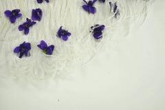 Vita fjädrar och lilablommor Royaltyfria Foton