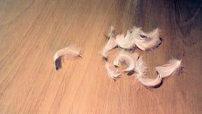 Vita fjädrar på trä Royaltyfria Foton