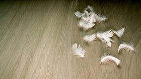 Vita fjädrar på trägolv Arkivfoto