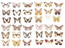 Vita fjärilar royaltyfri bild
