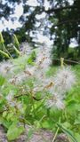 Vita gräsblommor Arkivbilder