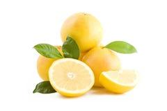 vita grapefrukter Arkivbild