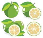Vita grapefruktvektorillustrationer Royaltyfri Fotografi