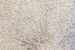 Vita Grey Carpet Texture för bakgrund Arkivbilder
