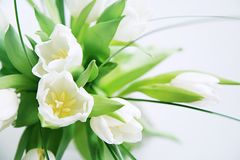 vita grupptulpan Royaltyfri Fotografi