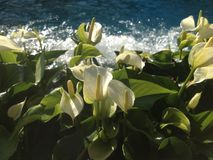 vita härliga blommor arkivbilder