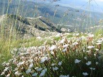 vita härliga blommor Royaltyfria Bilder