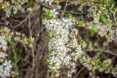 vita härliga blommor Royaltyfri Bild