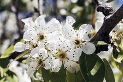 vita härliga blommor Arkivfoto
