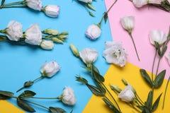 vita härliga blommor mycket eustoma på färgrik ljus pappers- bakgrund ovanför sikt arkivbild