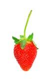 vita härliga isolerade jordgubbar Arkivfoto