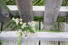 Vita Heath Wildflowers Wooden Fence fotografering för bildbyråer