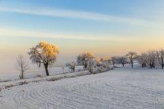 Vita iskalla träd i snö täckt landskap Arkivbild