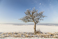 Vita iskalla träd i snö täckt landskap Arkivfoto