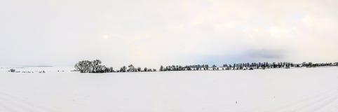 Vita iskalla träd i snö täckt landskap Royaltyfri Bild