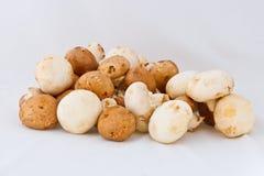 vita isolerade blandade champinjoner Arkivfoto