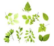 vita isolerade leaves Arkivbilder
