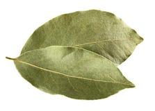 vita isolerade leaves för fjärd nya örtar Royaltyfri Foto