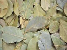 vita isolerade leaves för fjärd nya örtar Royaltyfri Bild