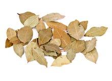 vita isolerade leaves för fjärd nya örtar Arkivbild