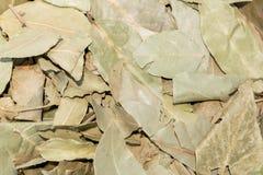 vita isolerade leaves för fjärd nya örtar Closeupbakgrundstextur Arkivfoto