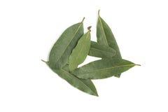 vita isolerade leaves för fjärd nya örtar Laurusnobilis Arkivbilder