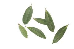 vita isolerade leaves för fjärd nya örtar Laurusnobilis Royaltyfria Foton