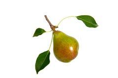 vita isolerade pears för bakgrund frukt Royaltyfria Bilder