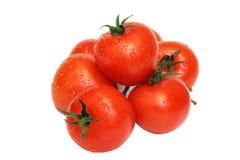 vita isolerade röda mogna tomater Royaltyfri Foto