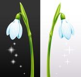 vita isolerade snowdrops royaltyfri illustrationer