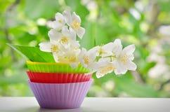 Vita Jasmine Flower royaltyfria foton