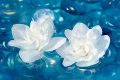 Vita Jasmine Flowers på vatten Royaltyfria Bilder