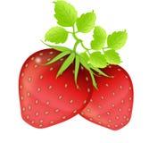 vita jordgubbar stock illustrationer