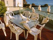 Vita kakaduor Fotografering för Bildbyråer