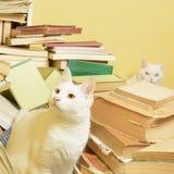 Vita katter och en grupp av böcker Selektivt fokusera Arkivbild