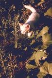 Vita Kitten Outdoor Fotografering för Bildbyråer