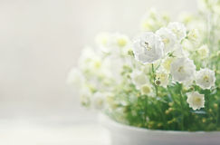 Vita klockablommor Royaltyfria Foton