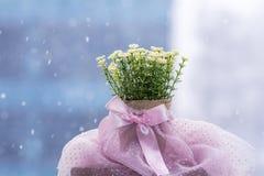 Vita konstgjorda blommor som är ordnade i mini- papp, lägger in Arkivbild