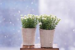 Vita konstgjorda blommor som är ordnade i mini- papp, lägger in Royaltyfria Bilder