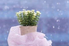Vita konstgjorda blommor som är ordnade i mini- papp, lägger in Royaltyfri Foto