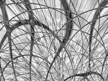 vita krökt linjer för black Royaltyfri Bild